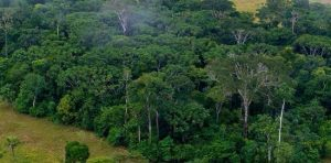 hutan-sumber-pangan